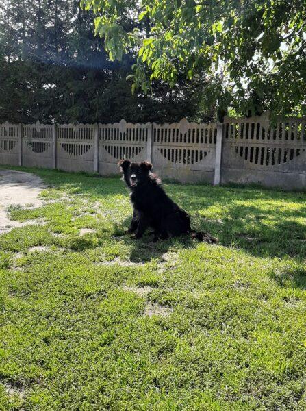 zdjęcie psa do adopcji